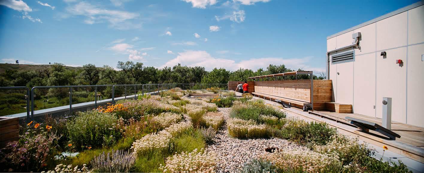 green roof of helen schuler nature centre