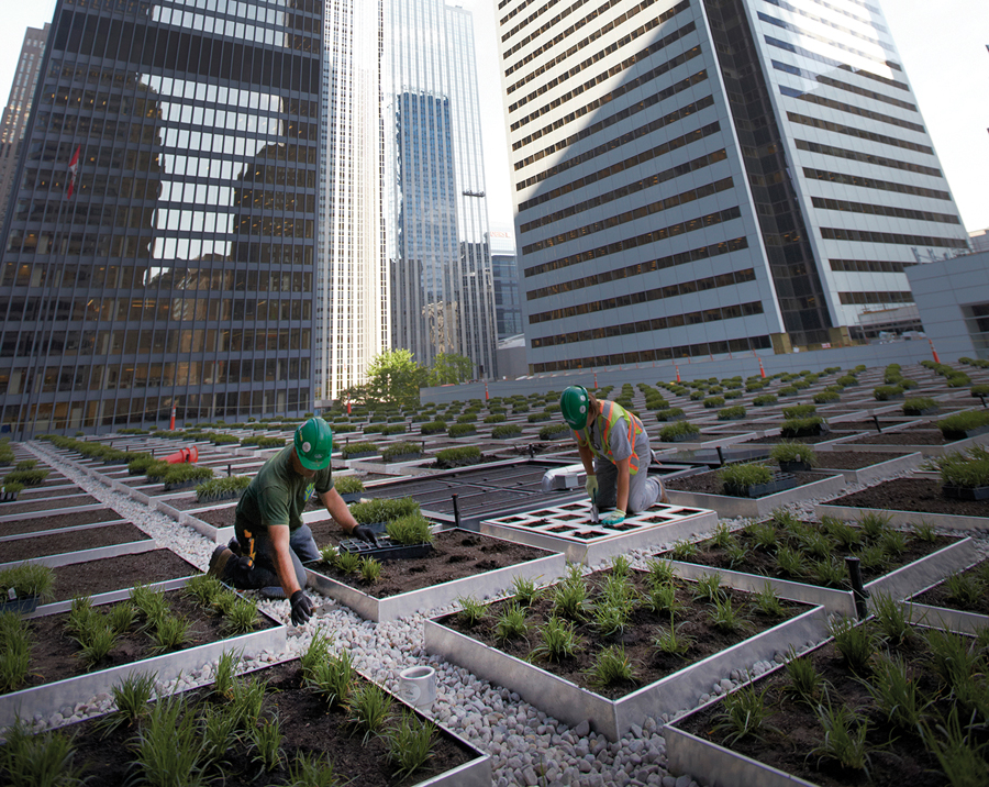 The green roof atop the  TD Centre's banking pavilion in Toronto. Photo courtesy Cadillac Fairview